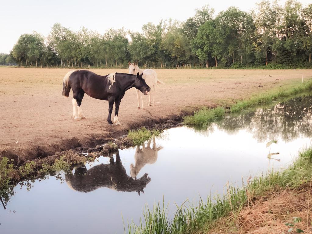 Paard met reflectie