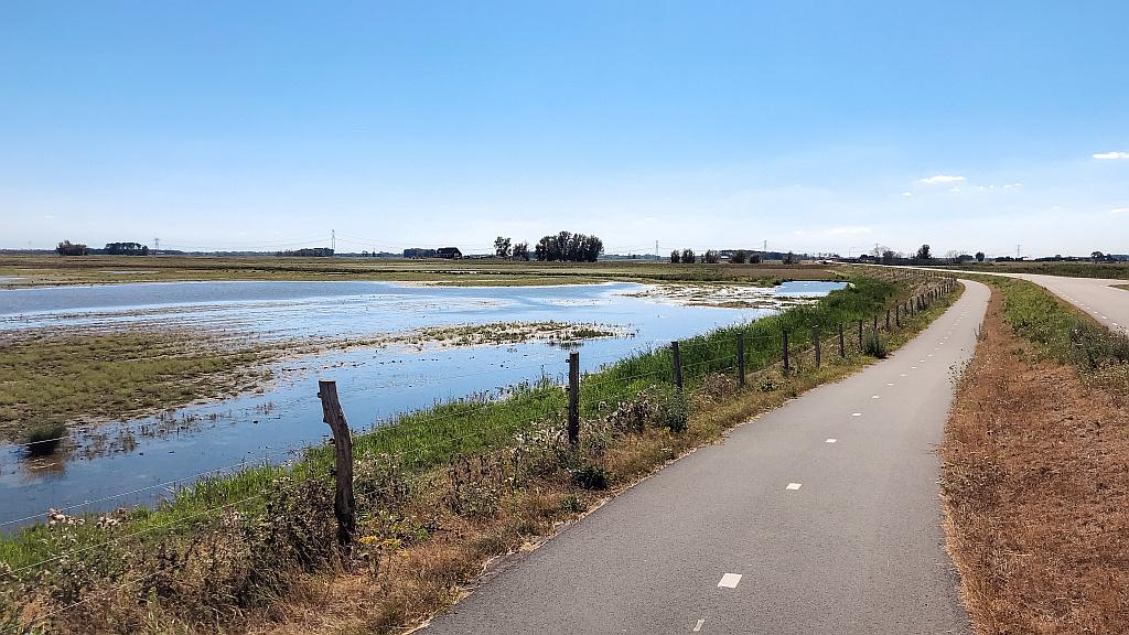 Hoog water in de Biesbosch
