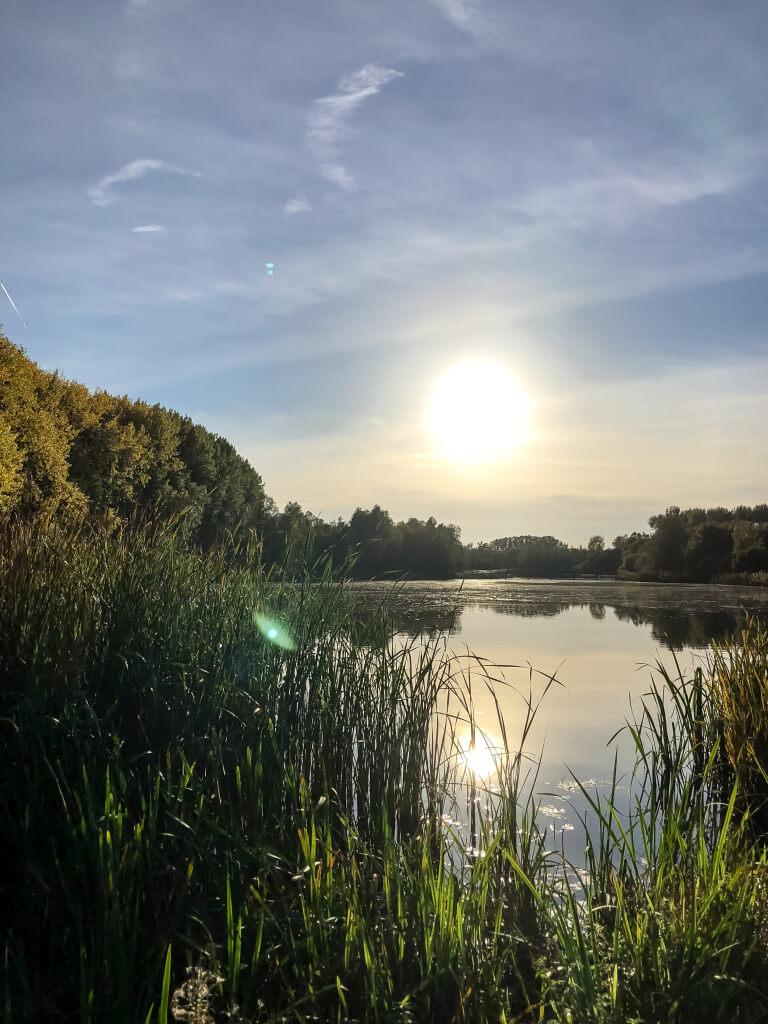 Dordtse Biesbosch