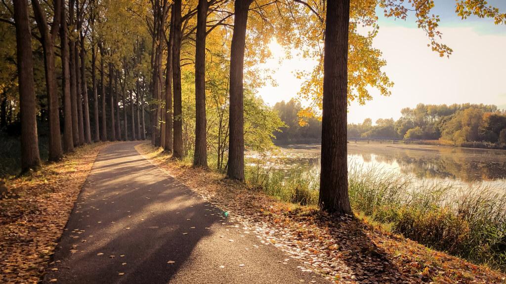 Wandelen in de Dordtse Biesbosch