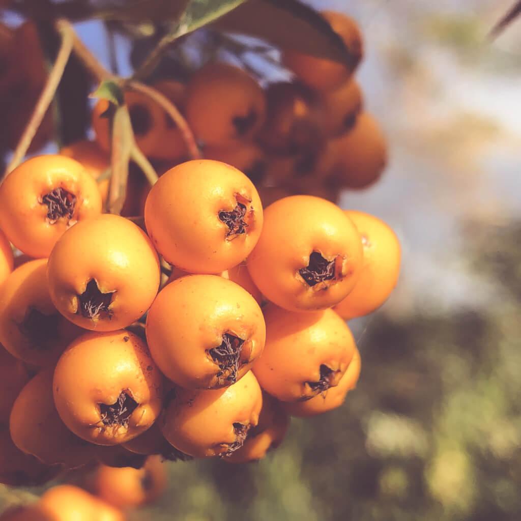 Mooie oranje besjes