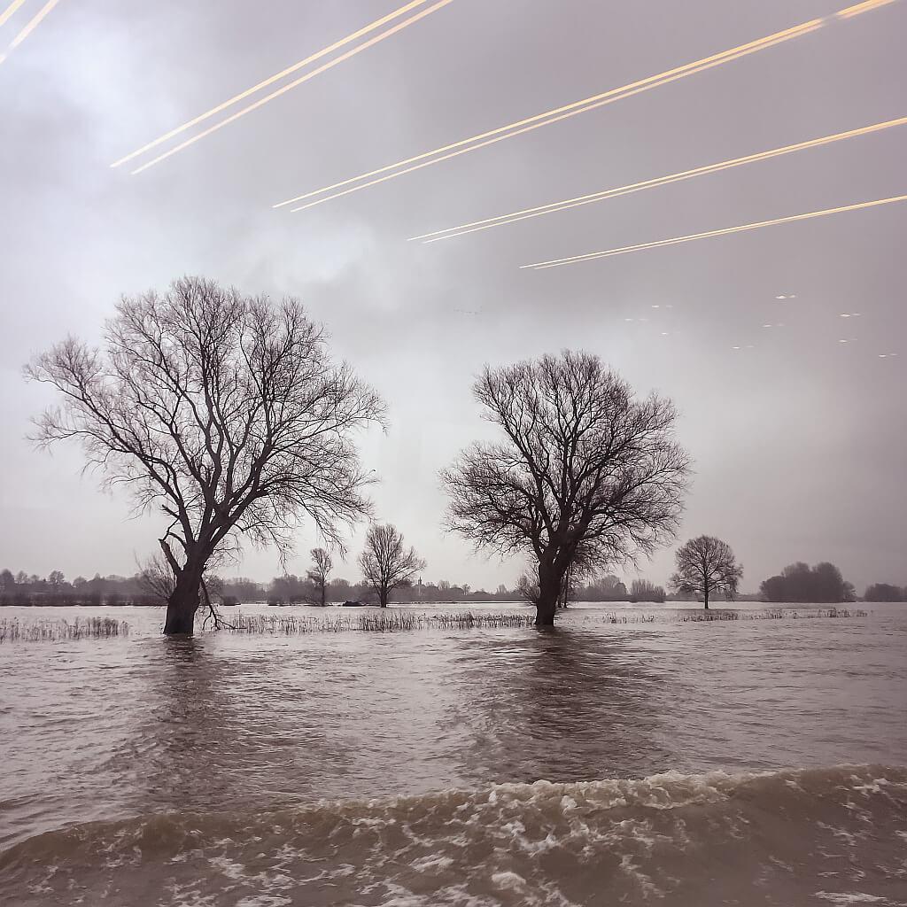 Bomen met hun voeten in het water