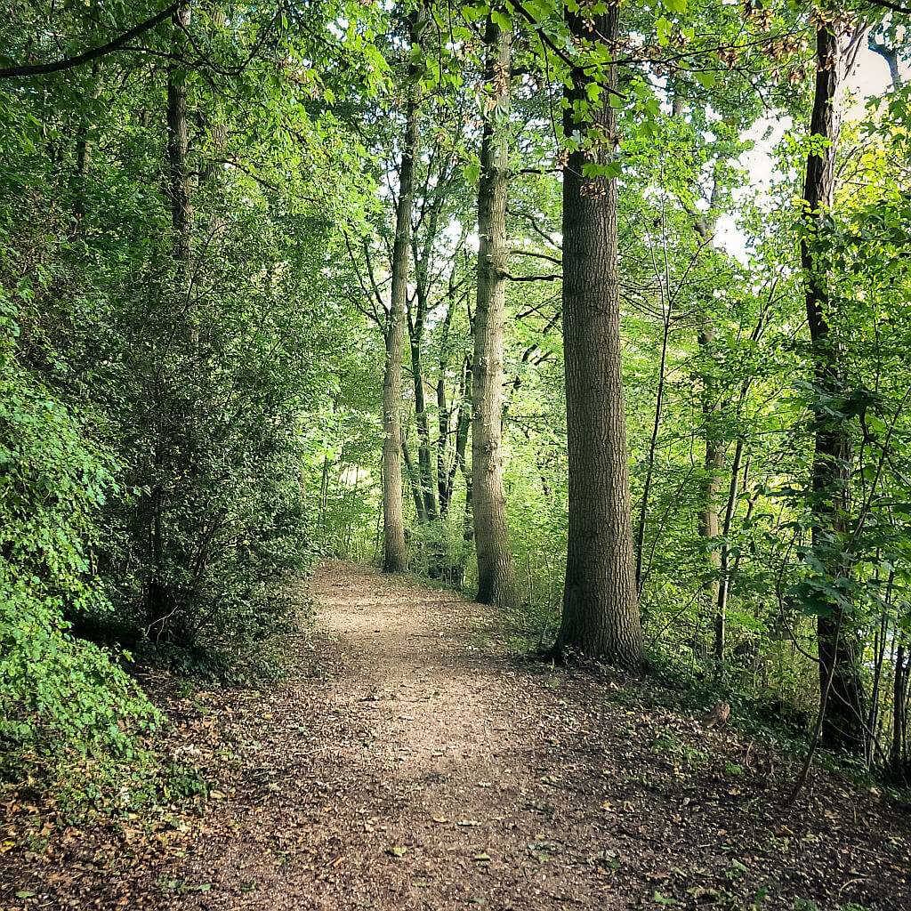 Park in Zaltbommel