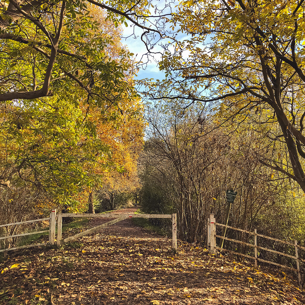 Herfstkleuren op Landgoed Mariënwaerdt