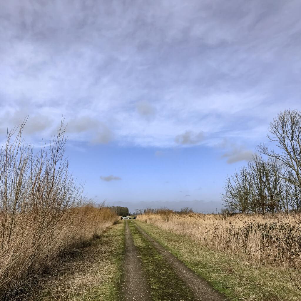 Wandelpad in de Biesbosch