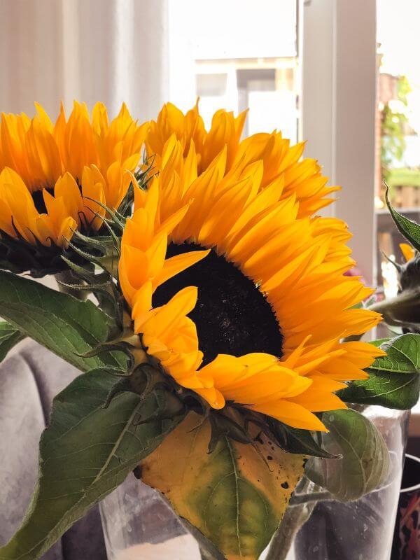 Zonnebloemen bij mijn moeder