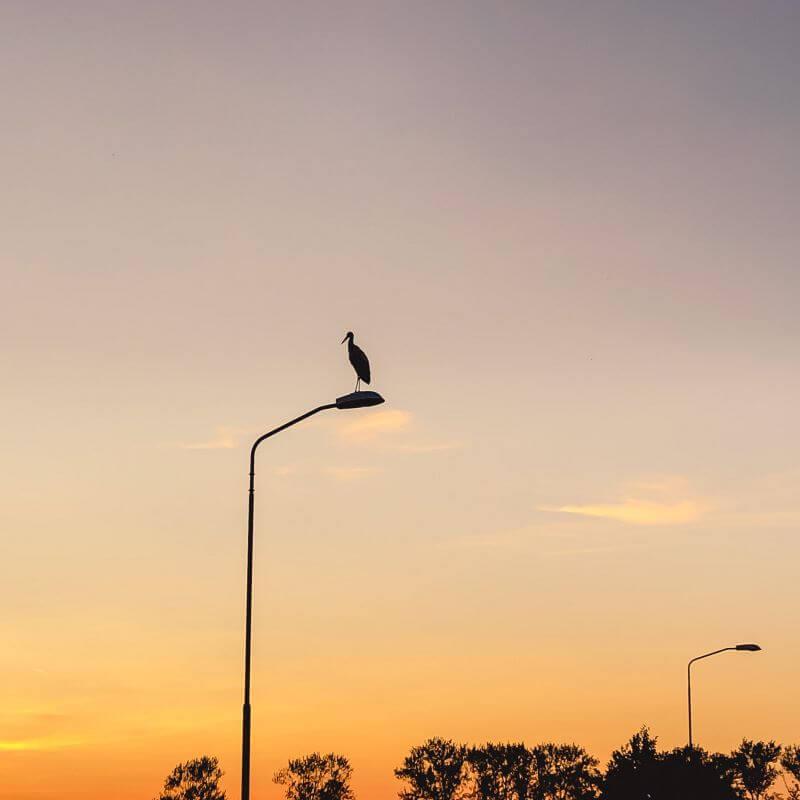 Ooievaar op een lantaarnpaal