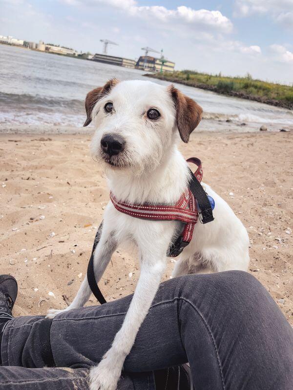 Met Bas op het strandje