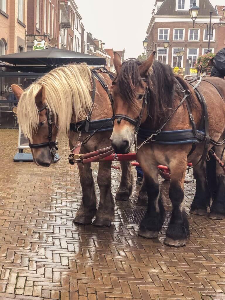 Paarden op de Grote Markt