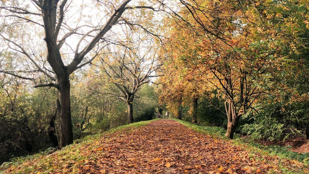 Een tapijt van bladeren