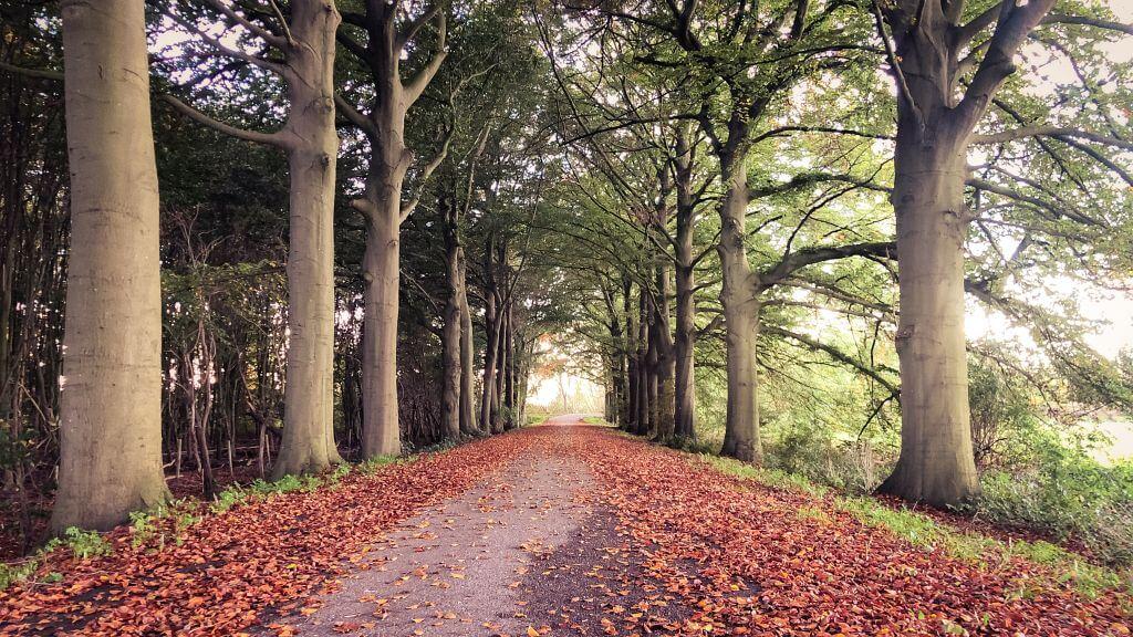 Herfst bij Mariënwaerdt