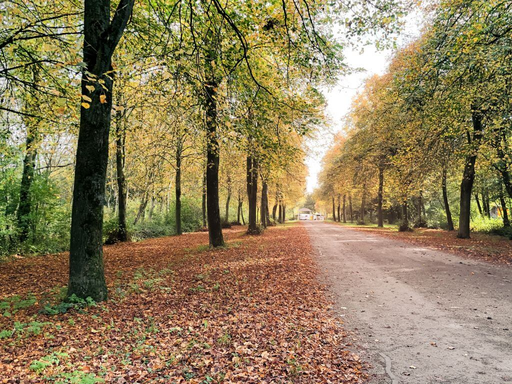 Herfst in het Lingebos