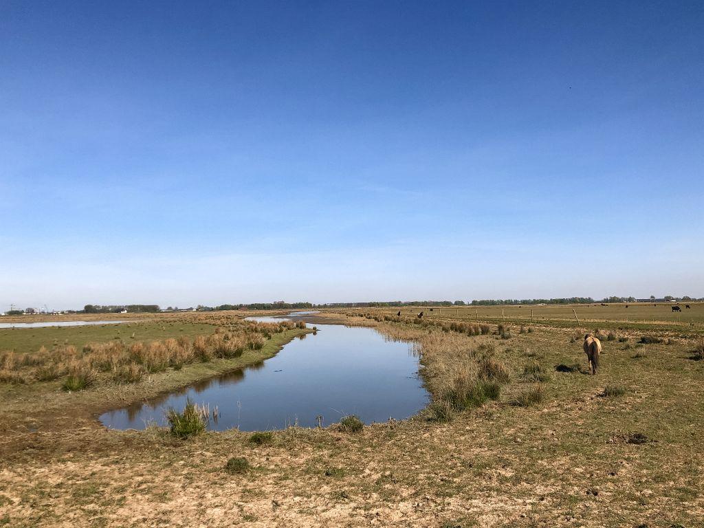 Uitgestrekte polder