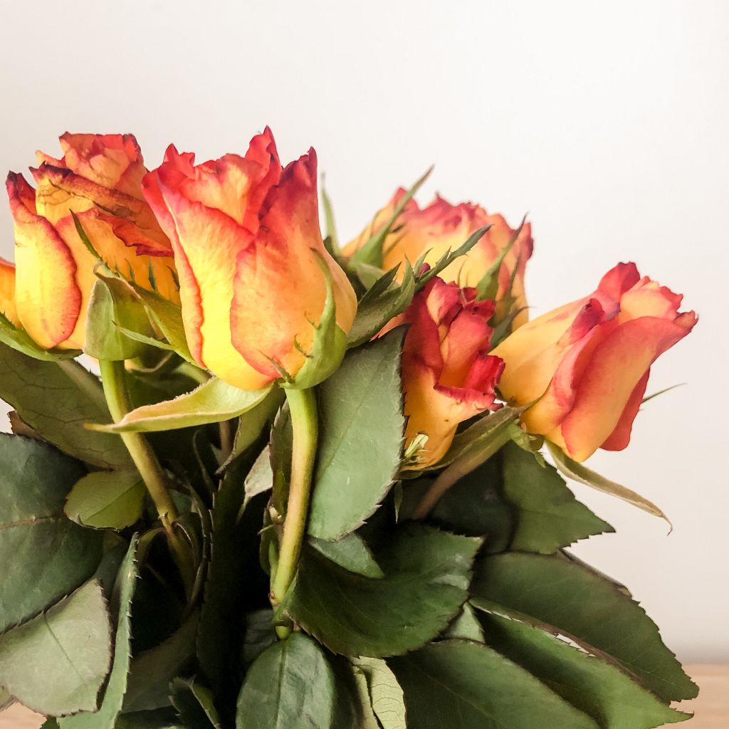 Mijn rozen