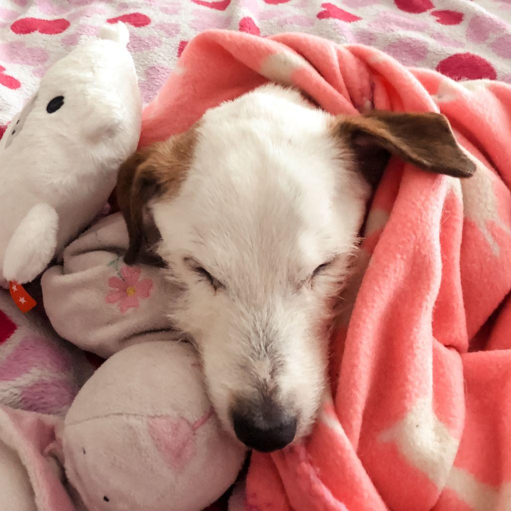 Lekker slapen met zijn knuffels
