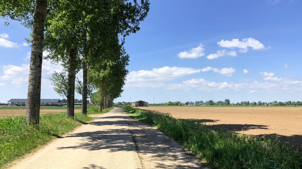 Rustig weggetje in de polder