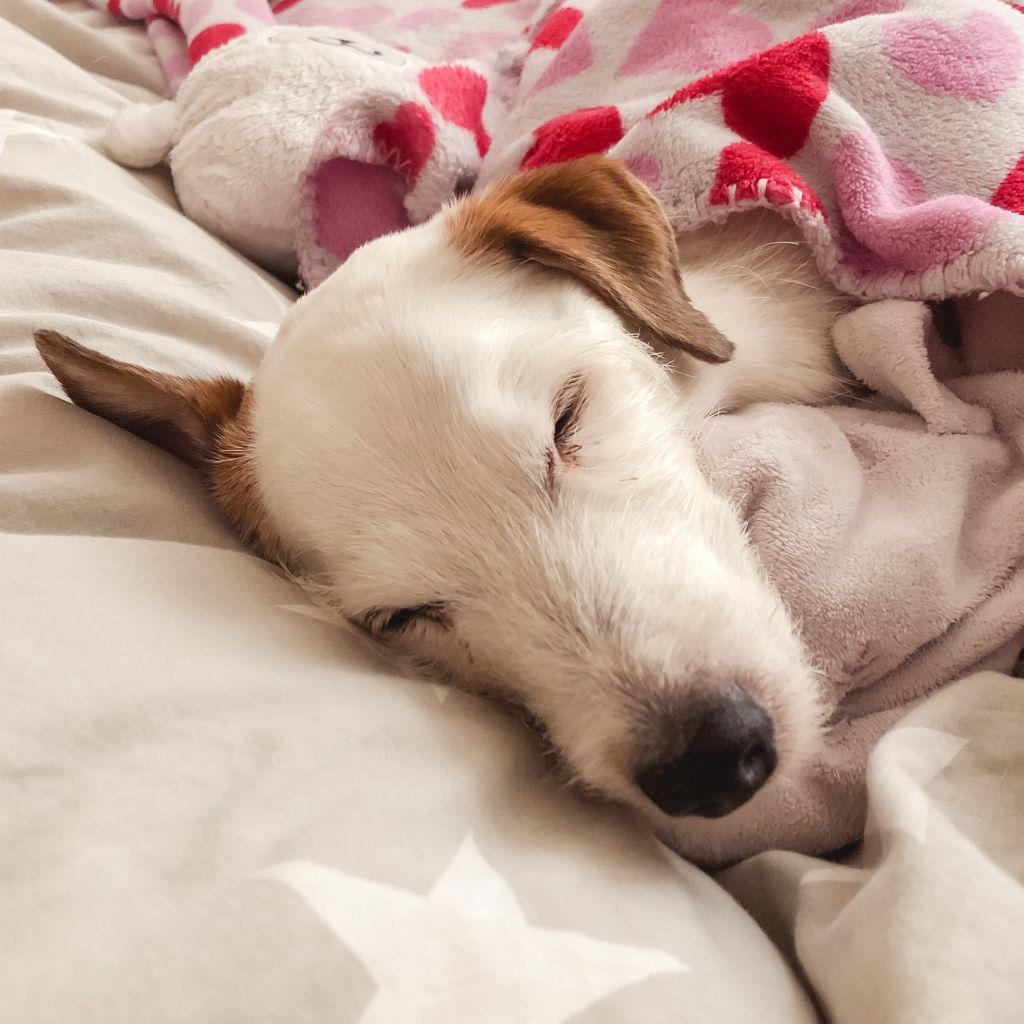 Slapende honden...