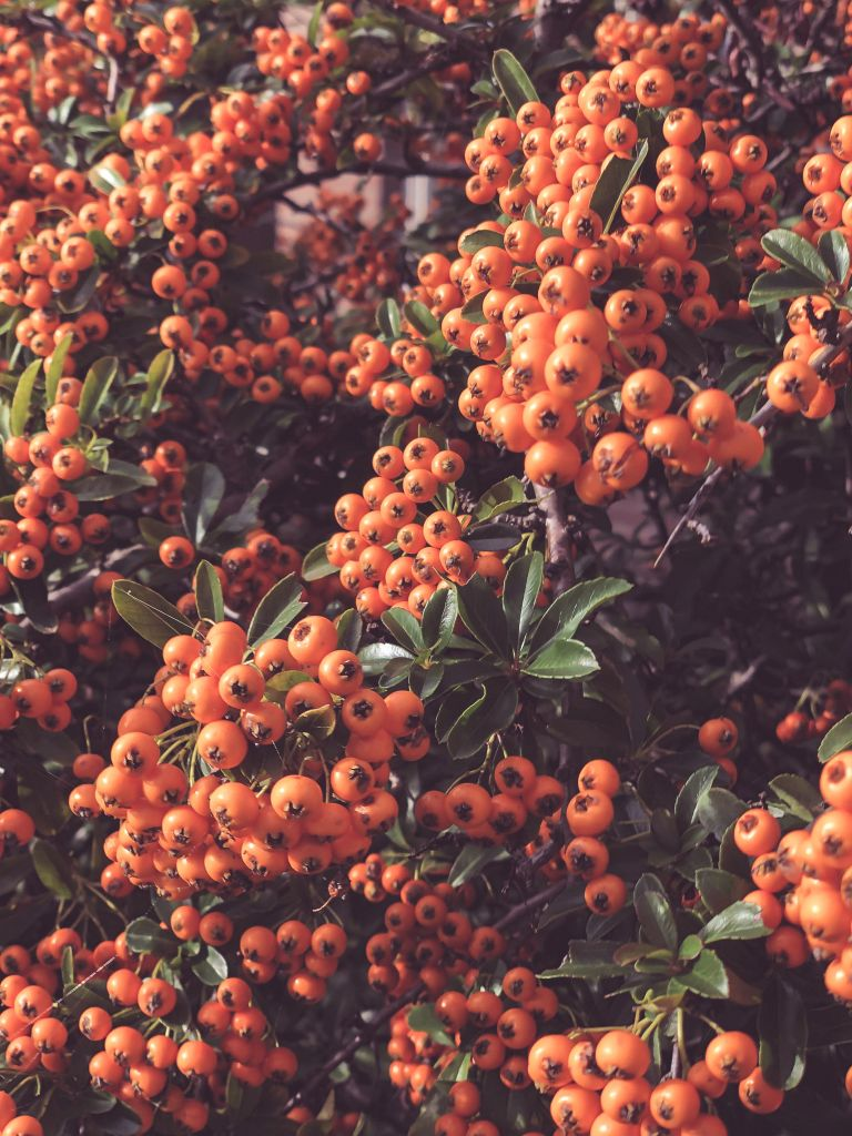 Oranje besjes