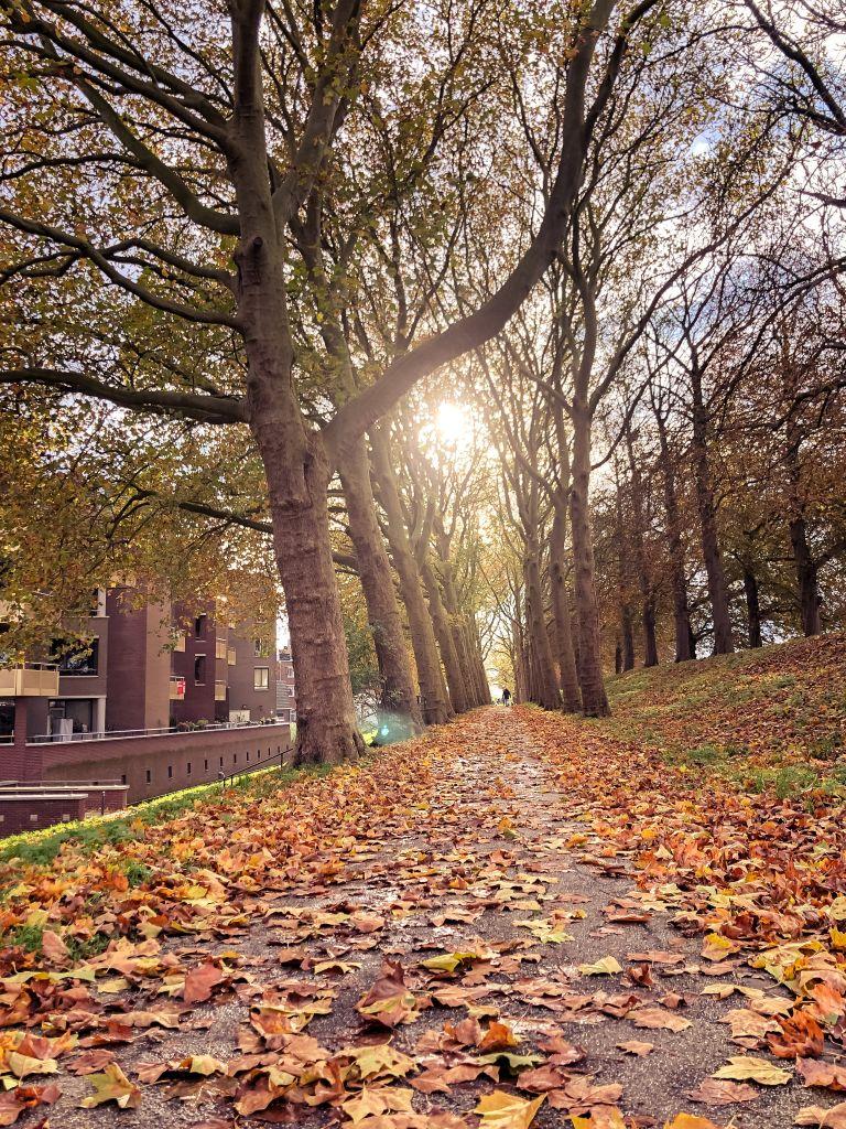Herfst op de vestingwal