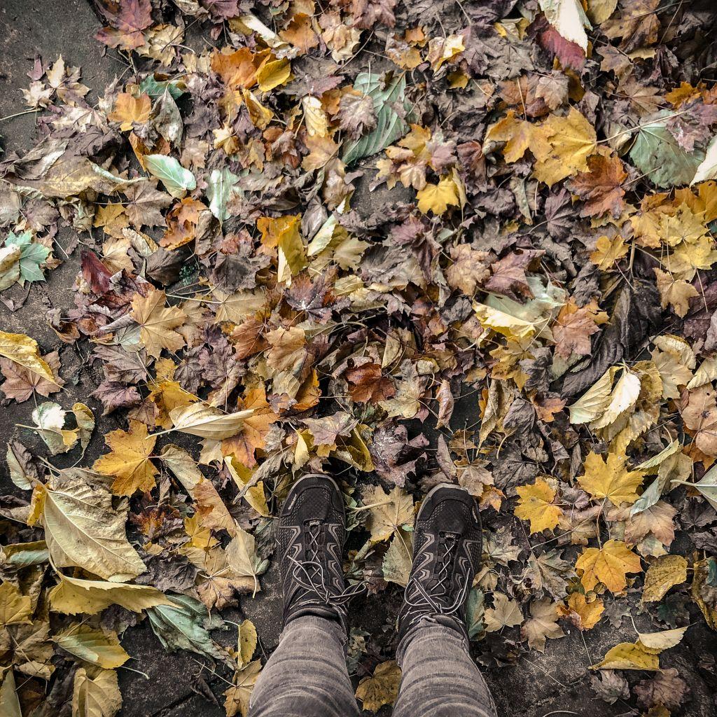 Veel bladeren