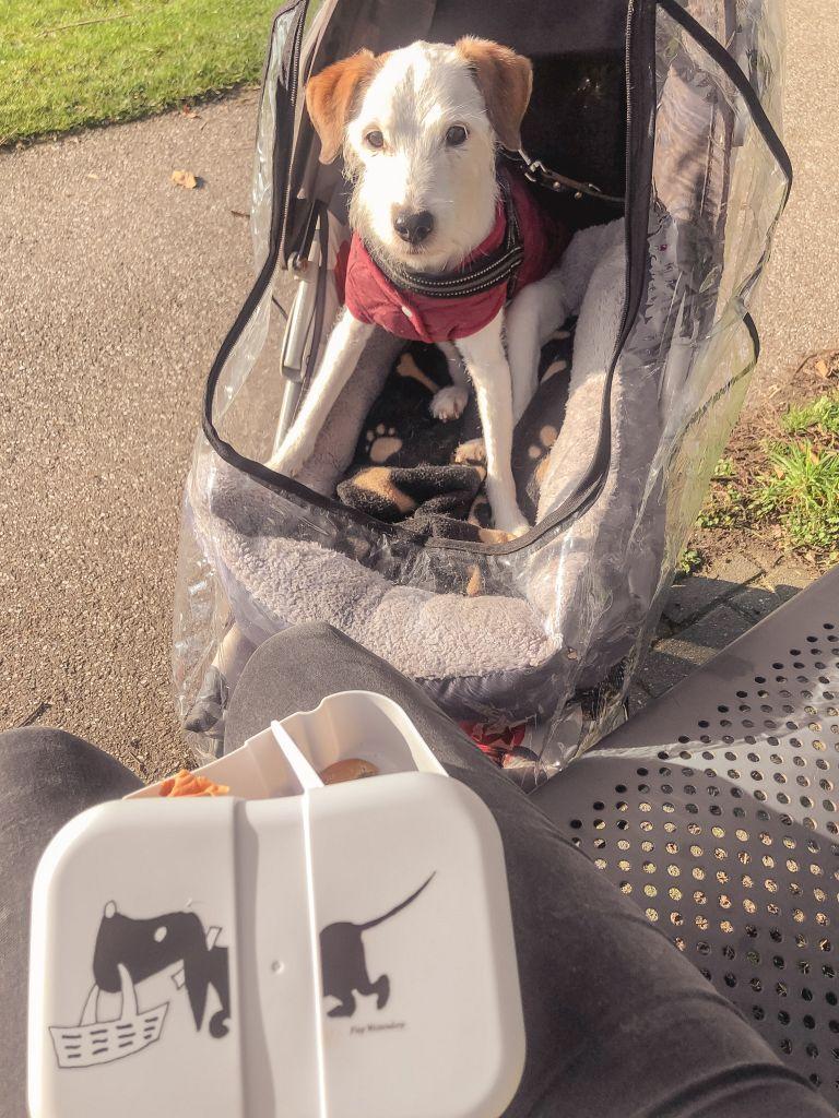 Picknicken met Bas