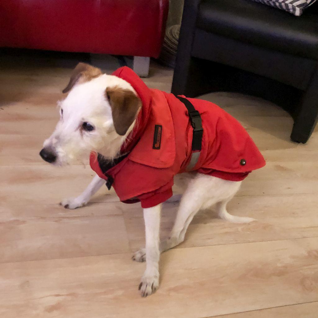 Bas met een nieuwe jas