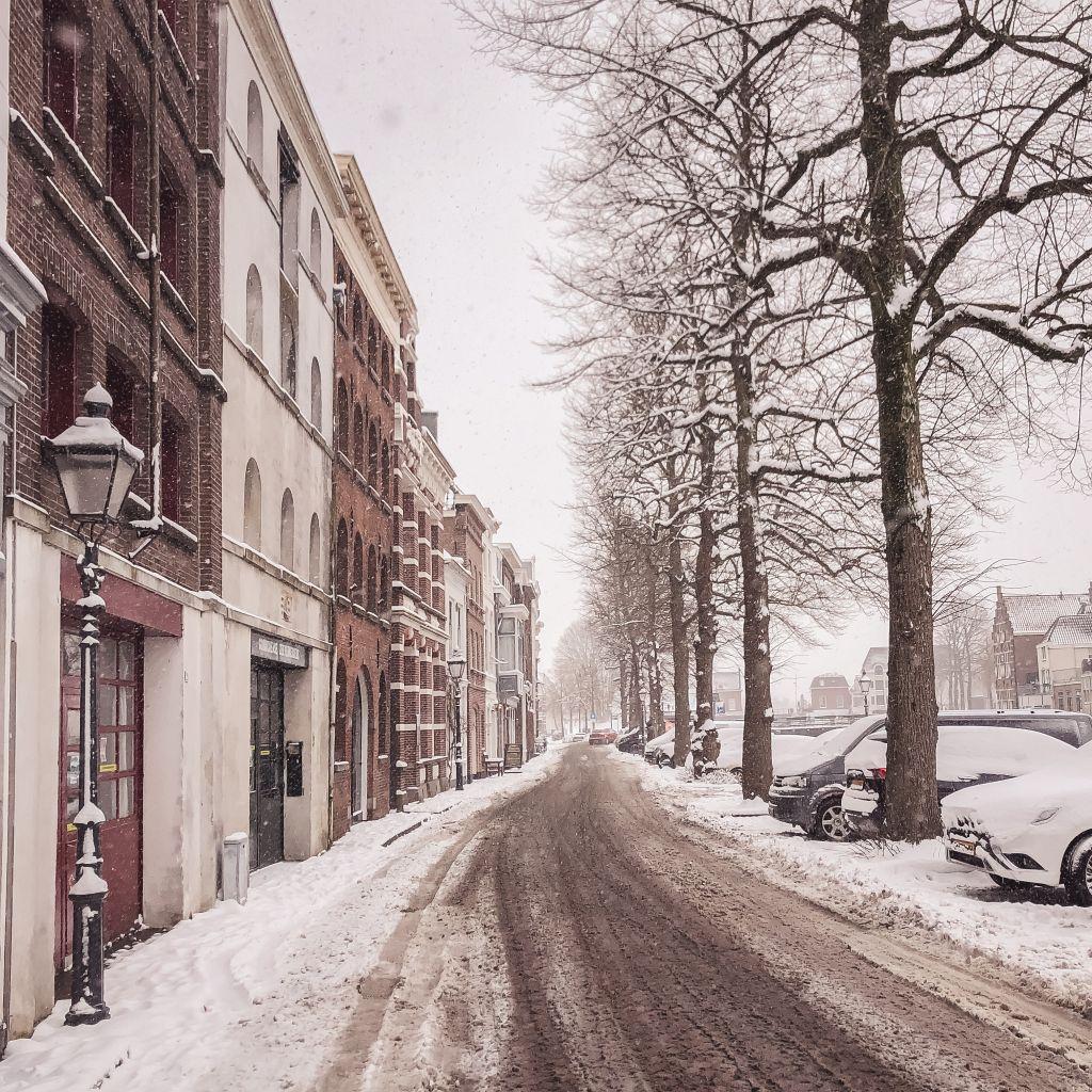 Appeldijk in de sneeuw