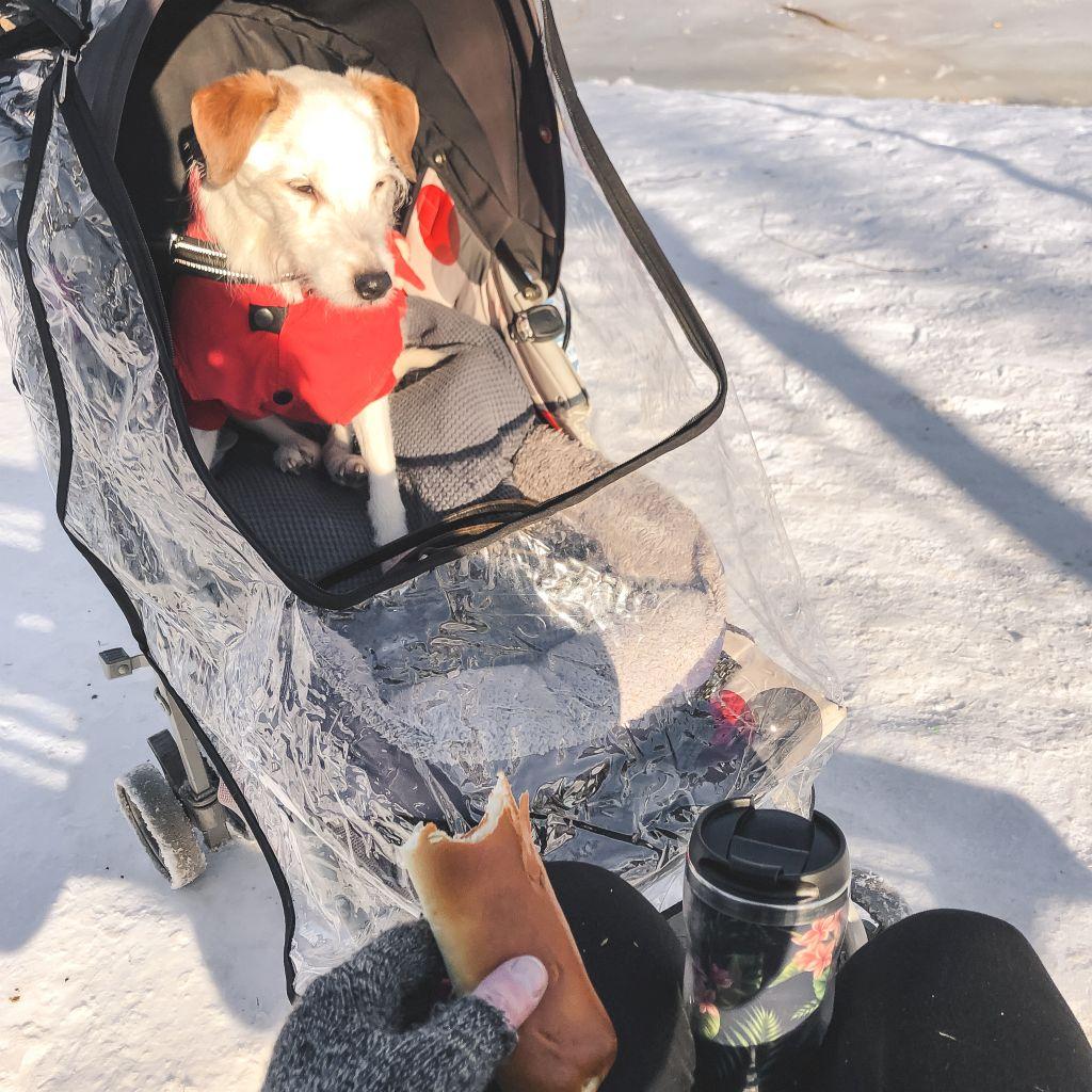 Picknicken in de sneeuw