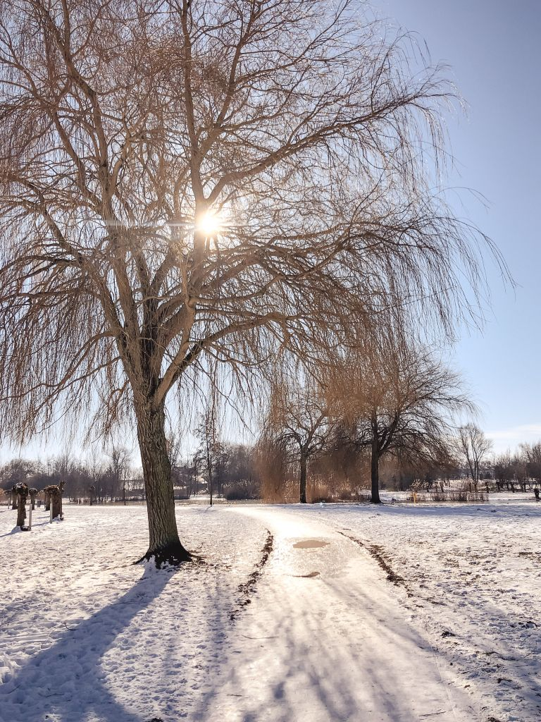 Sneeuwschaduwen