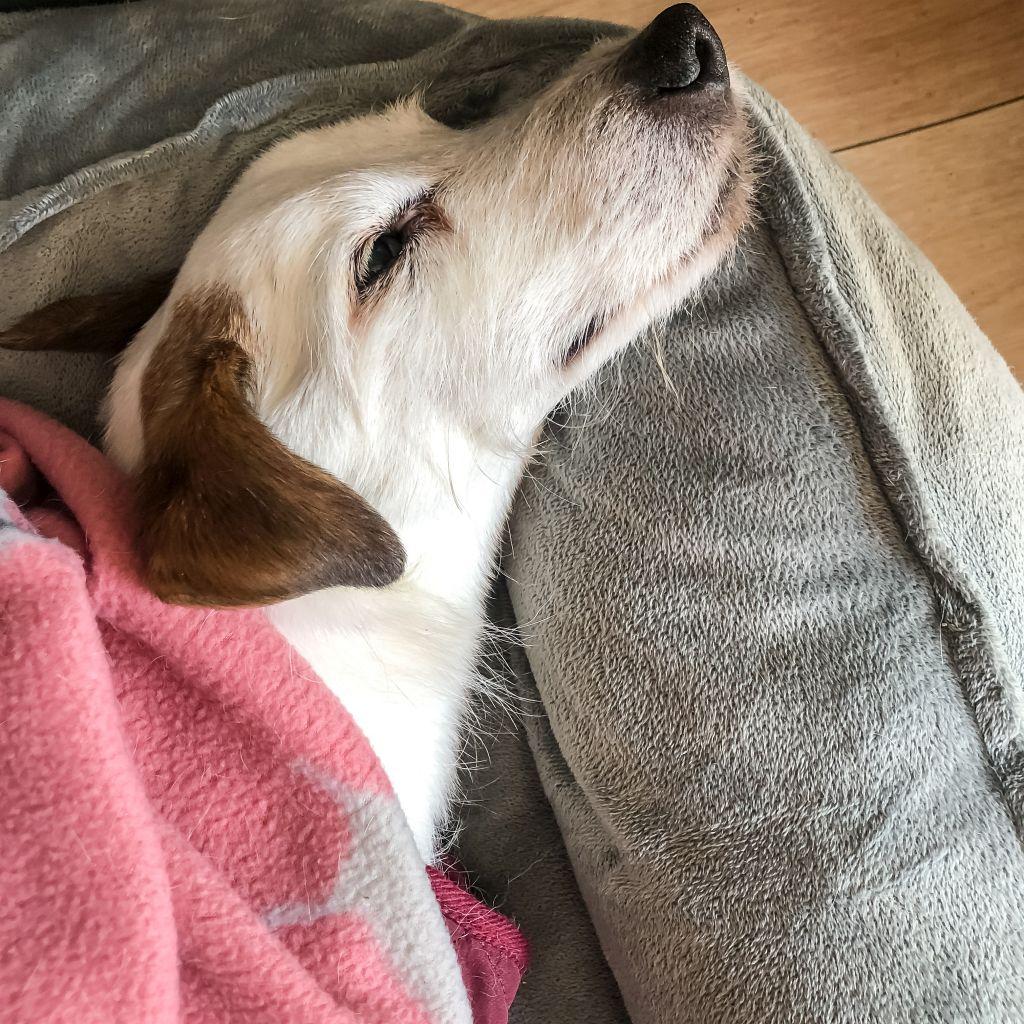 Tevreden hondje