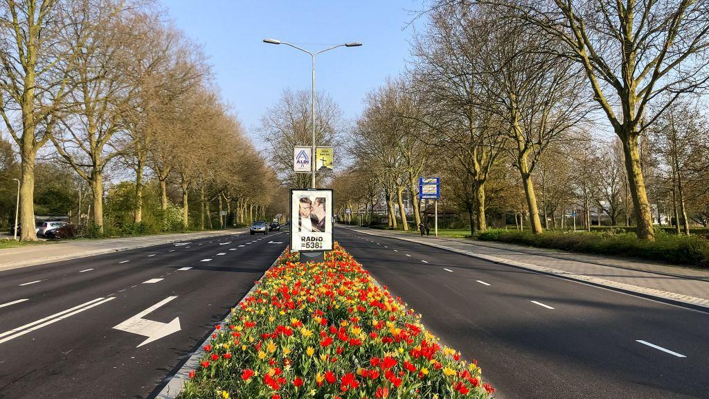 Tulpen aan de Banneweg