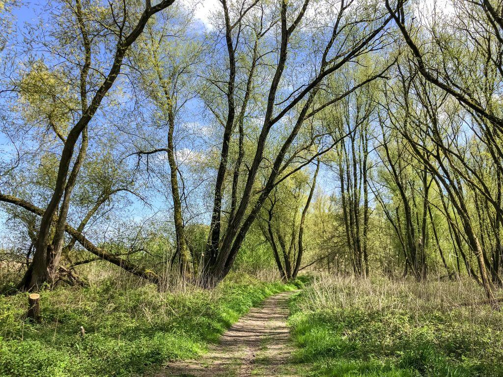 Een mini bos