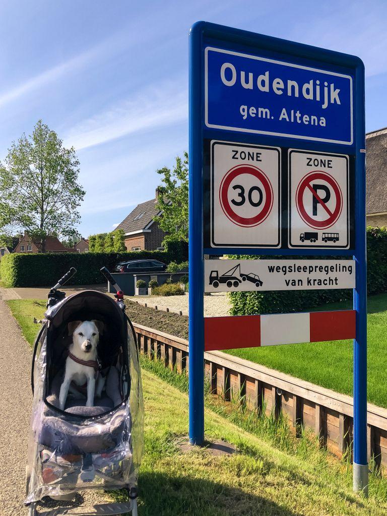 Oude hond in Oudendijk