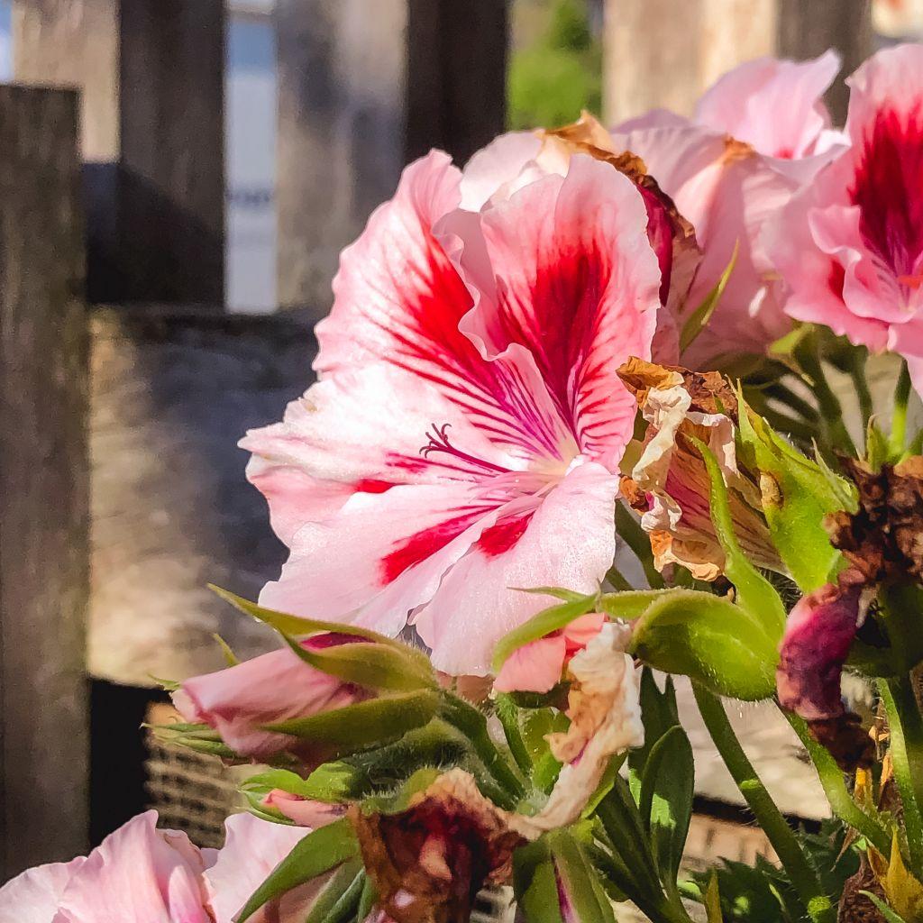 Mooie bloemen in mijn tuin