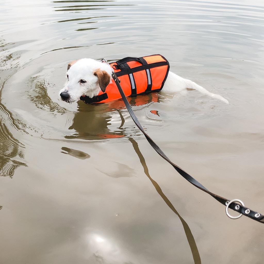 Bas met z'n zwemvest