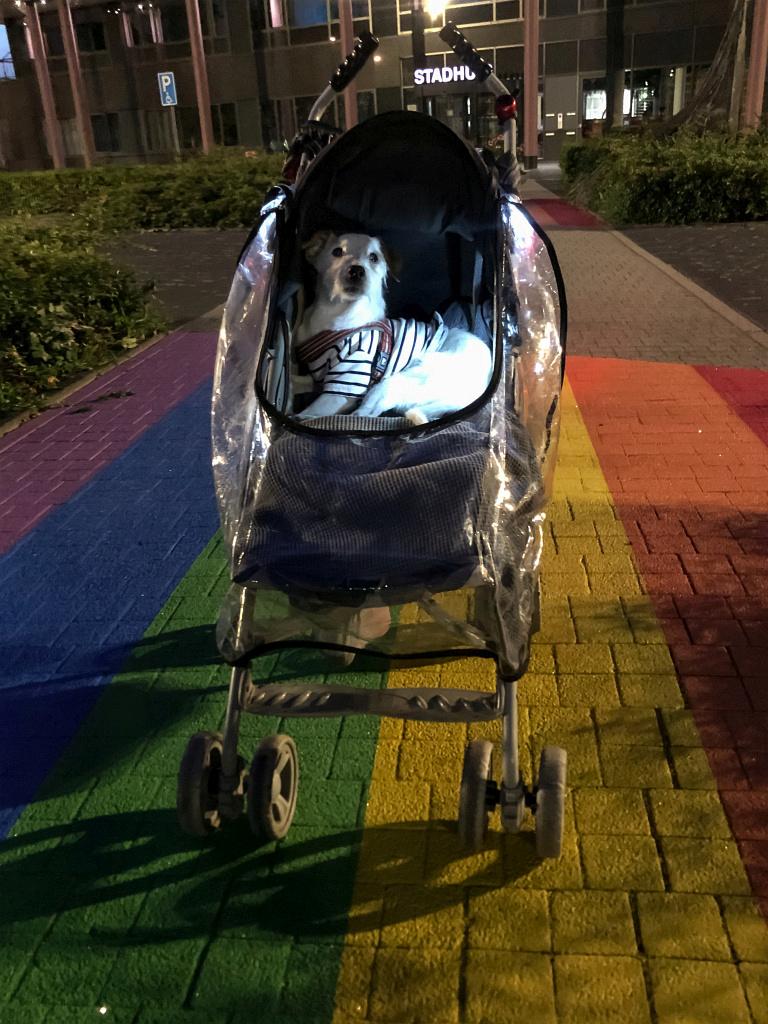 Bas op het regenboogpad