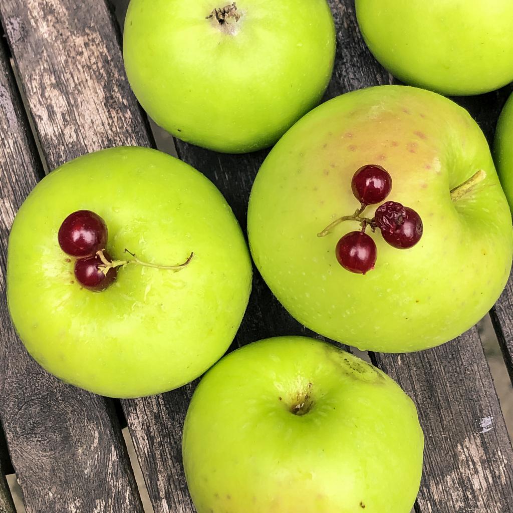 Appeltjes uit eigen tuin