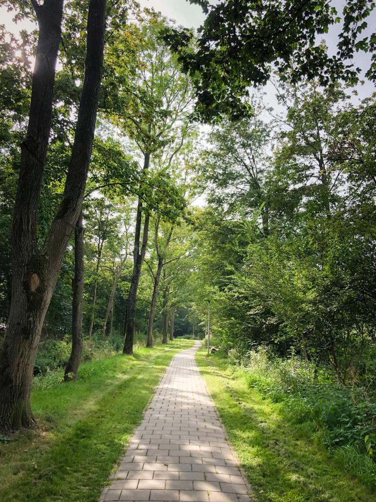 Wandelpad in de Haarwijk