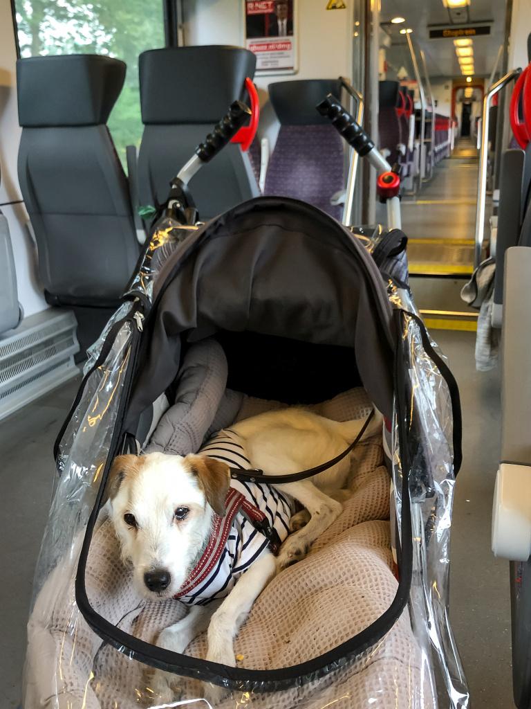 Bas in de trein